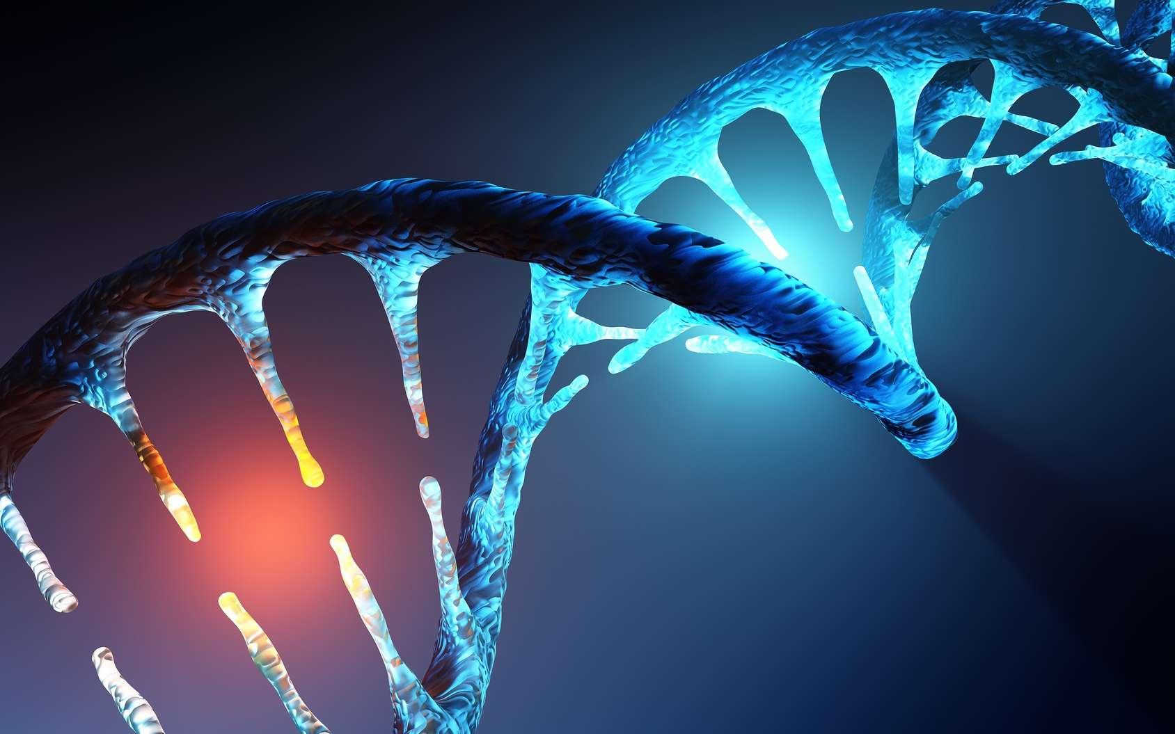 Description du schéma d'une molécule d'ADN et ses caractéristiques