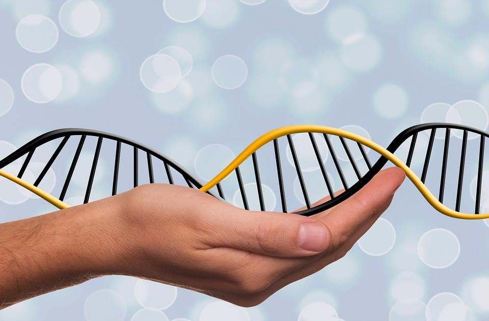 Comment marche un kit ADN (composition)?