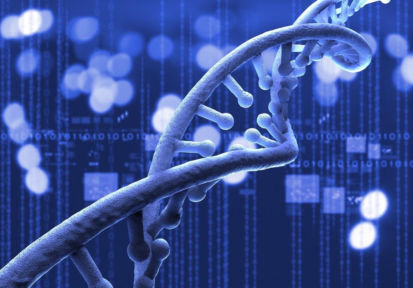 ADN masculin et féminin: ce qui nous différencie